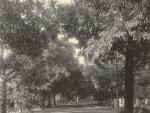 Deodar Avenue